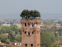 The Guinigi Tower